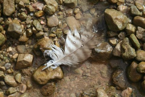 Feather in Water