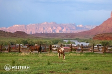 Horses grazing at Red Cliffs Lodge